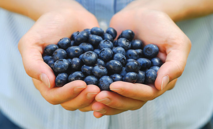 Blue Berries Are Antioxidants Treasure