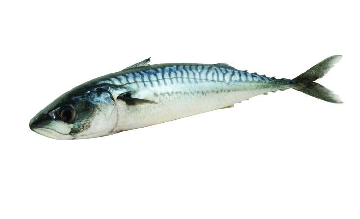 Oily Fish Strengthens Brain