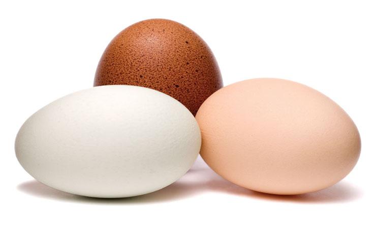 Healthy Eggs